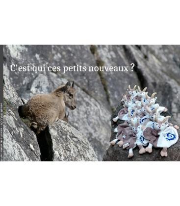 Doudou Vanoise
